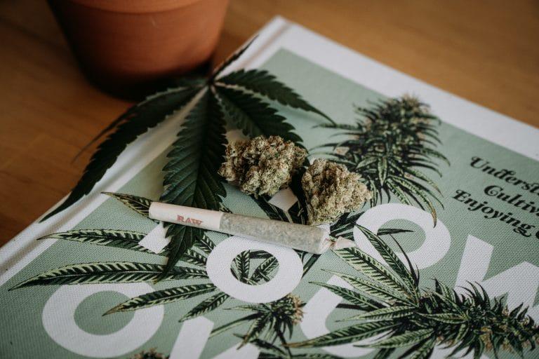 diferencias entre marihuana y hachis